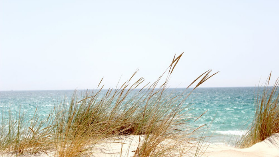 scenes of beach grass and sand overlooking the ocean