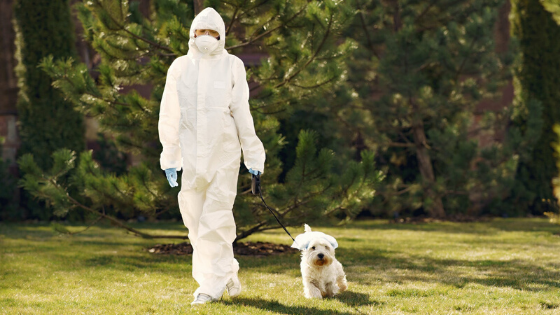 A person is seen walking their dog in a full hazmat suit