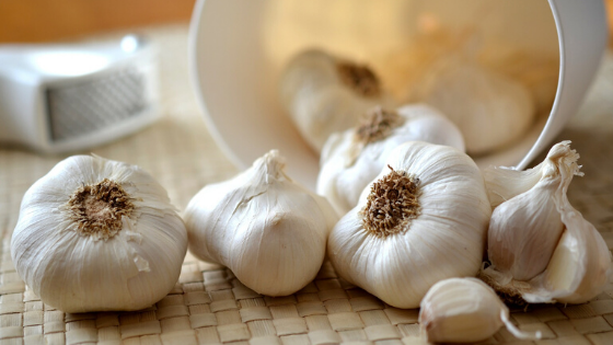 Several bulbs of garlic are laid out on a counter