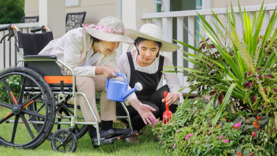 A seniorwoman in a wheelchair and her daughter tend to their garden